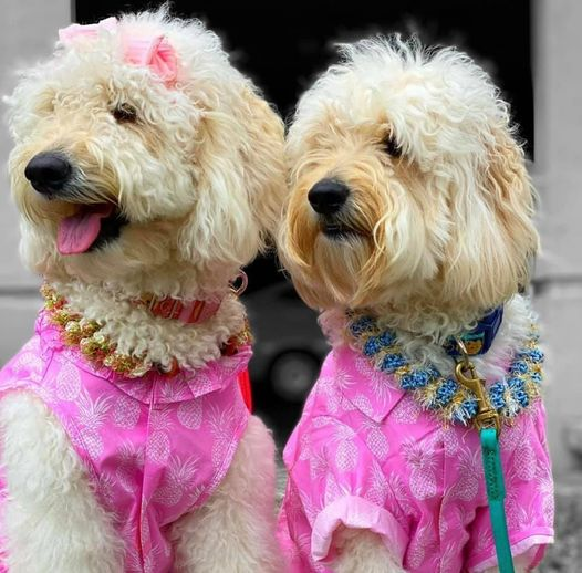 カルビン&スージー:ペアルックでわんこハワイアンスタイル①