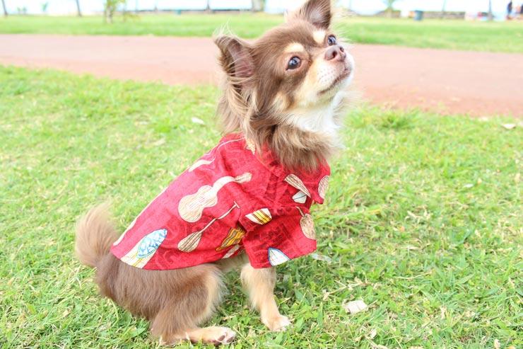 ハワイアン柄が可愛い カルビン&スージーのペット用アロハシャツ